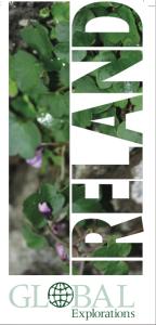 tri-fold-brochure